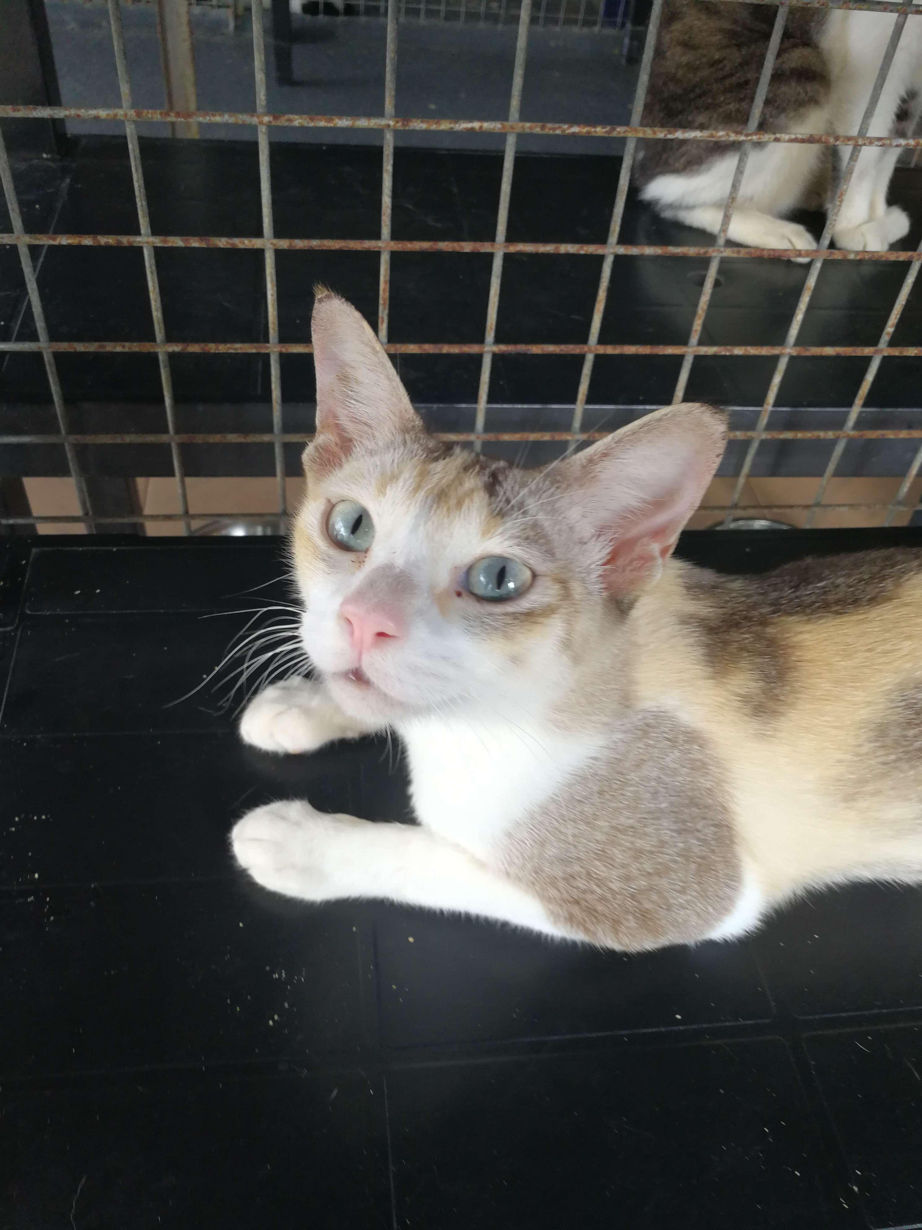 sdr – Cat Welfare Society